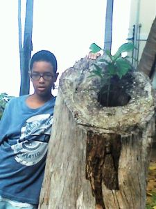pedro, árvoe em S. Lázaro