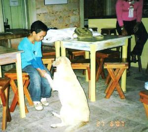 pedro-cachorro-cidade-de-pedra