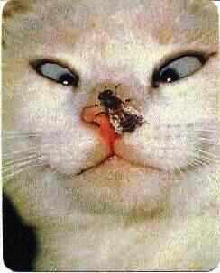 gato bobão