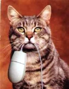 gato pega o rato
