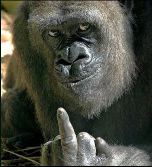 macaco, dedão