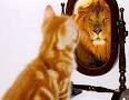 gatoe e leão no espelho