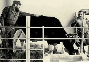 FIDEL, a vaca...