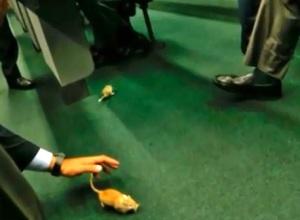 ratos no congresso 1