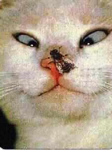 Essa imagem tem um atributo alt vazio; o nome do arquivo é gato-bobc3a3o-edited.jpg